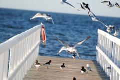 Bryggfåglar